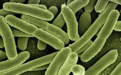 Bacterias y Parásitos en el Agua