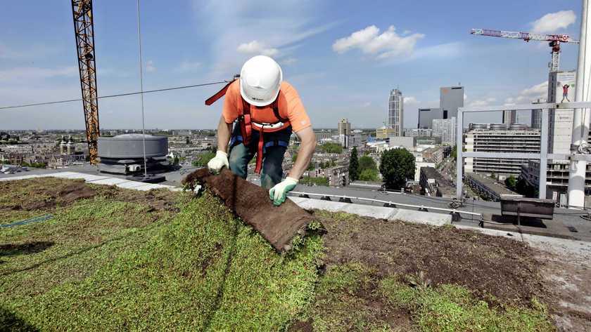 Paneles solares o musgo, serán obligatorios en los techos de Ámsterdam